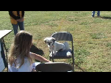 Sonny competes at the Plano Early Lions Club's K-9 Konvention